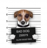 INTERRUPTEUR DECORE BAD DOG